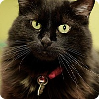 Adopt A Pet :: Tink - Evergreen, CO