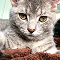 Adopt A Pet :: Mouse - St. Charles, IL