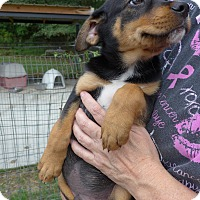 Adopt A Pet :: Major - Manning, SC