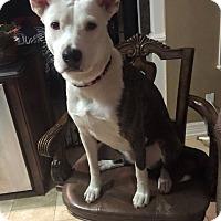 Adopt A Pet :: Courtesy Post - Tigger - Burleson, TX