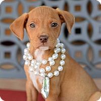 Adopt A Pet :: Kai - Baton Rouge, LA