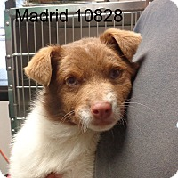 Adopt A Pet :: Madrid - baltimore, MD