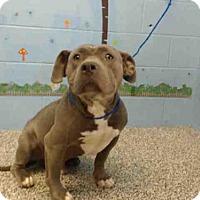Adopt A Pet :: RESCUE ONLY - San Bernardino, CA
