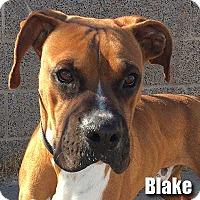 Adopt A Pet :: Blake - Encino, CA