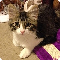 Adopt A Pet :: Pipurr - North Highlands, CA