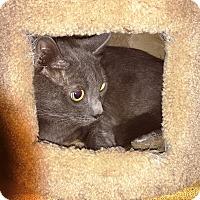 Adopt A Pet :: Alley - Riverside, CA