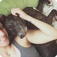 Plott Hound/Retriever (Unknown Type) Mix Dog for adoption in Clearwater, Florida - Rufus