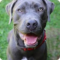 Adopt A Pet :: Silver - Santa Monica, CA
