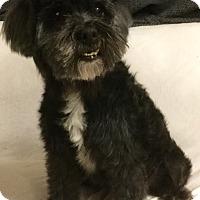 Adopt A Pet :: Theo - Phoenix, AZ