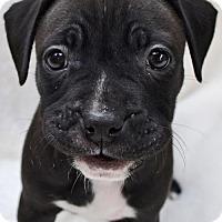 Adopt A Pet :: Piper - San Diego, CA