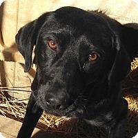 Adopt A Pet :: Cole - E. Greenwhich, RI