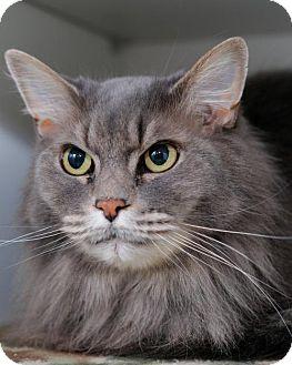 Domestic Longhair Cat for adoption in Boise, Idaho - Martha