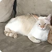 Adopt A Pet :: Sanford - Jacksonville, NC