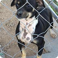 Adopt A Pet :: Mr. T - Post, TX