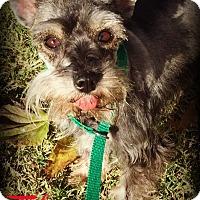 Adopt A Pet :: TIKA - Phoenix, AZ