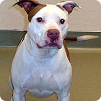 Adopt A Pet :: Lanie - Wildomar, CA