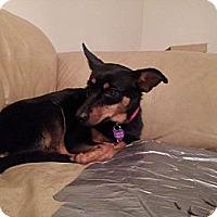 Adopt A Pet :: Rosie - West Bridgewater, MA