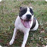 Adopt A Pet :: Ralph - Mocksville, NC