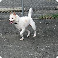 Adopt A Pet :: Eva - Tumwater, WA