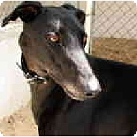 Adopt A Pet :: Robbie-FEATURED! - St Petersburg, FL