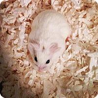 Adopt A Pet :: Cannoli - Bensalem, PA