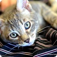 Adopt A Pet :: Luigi - Island Park, NY