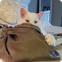 Adopt A Pet :: Casper - Fairfax, VA