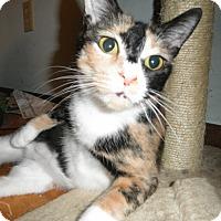 Adopt A Pet :: Gem - Milwaukee, WI