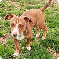 Adopt A Pet :: Mikey - Foster, RI