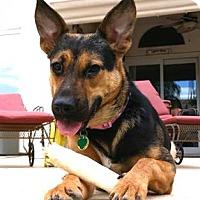 Adopt A Pet :: Baily - Scottsdale, AZ