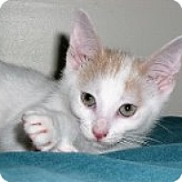 Adopt A Pet :: Speckles - Middletown, CT