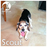Adopt A Pet :: Scout - Pittsburgh, PA