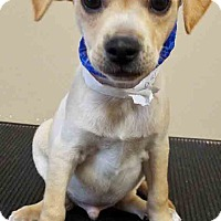 Adopt A Pet :: Ross - Oswego, IL
