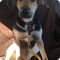 Adopt A Pet :: Emma - Royal Palm Beach, FL