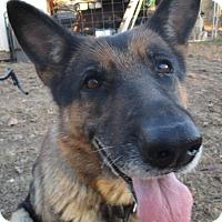 Adopt A Pet :: Gwen - Melbourne, AR