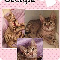 Adopt A Pet :: Georgia - Arlington/Ft Worth, TX