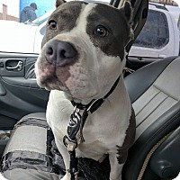 Adopt A Pet :: Izzy - Covington, TN