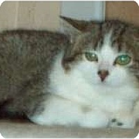 Adopt A Pet :: Lanie-Sponsor Me - Marion, WI
