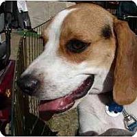 Adopt A Pet :: Lucky Bug - Phoenix, AZ