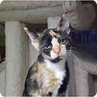 Adopt A Pet :: Bess - Lombard, IL