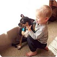 Adopt A Pet :: Cheddar - Inola, OK