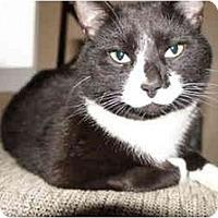 Adopt A Pet :: Bob - Xenia, OH