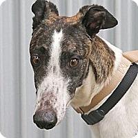 Adopt A Pet :: Megan - Santa Rosa, CA