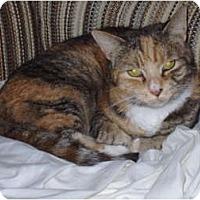 Adopt A Pet :: Tori - Narberth, PA