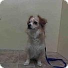 Adopt A Pet :: CAPTAIN HOOK