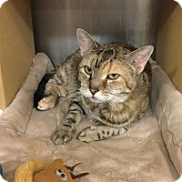 Adopt A Pet :: Symphony -Adoption Pending! - Colmar, PA