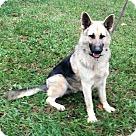 Adopt A Pet :: Commando