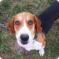Adopt A Pet :: Carl - Huntsville, TN