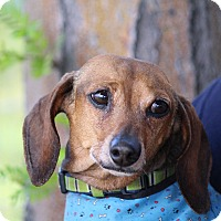Adopt A Pet :: Woody - Henderson, NV