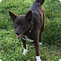 Adopt A Pet :: Tessa - Va Beach, VA
